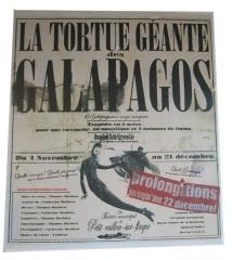 La tortue des Galapagos - Rebecca Dautremer